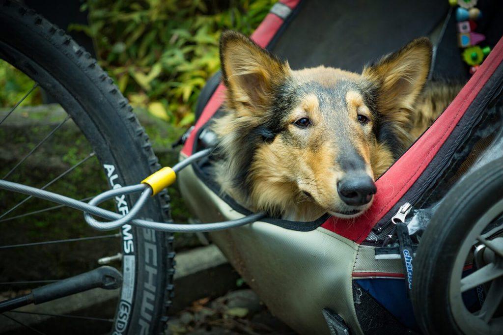 beste fietskar voor honden