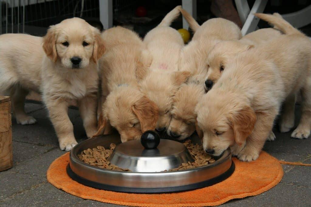 beste hondenvoer