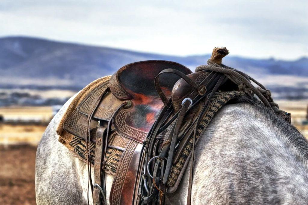 beste paardenzadels
