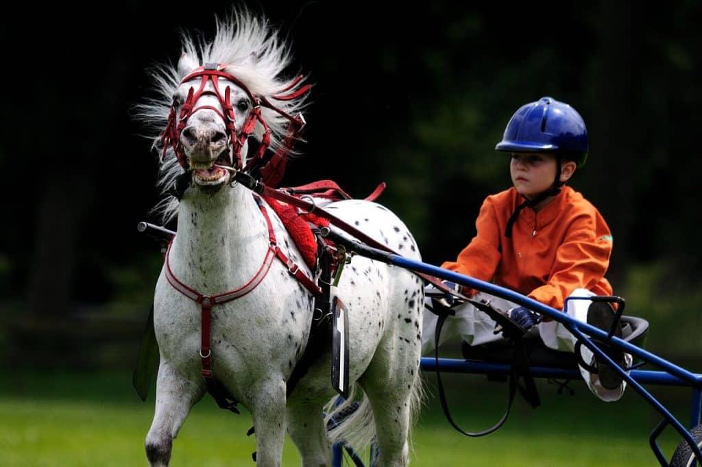 beste paardrijcaps voor kinderen (1)