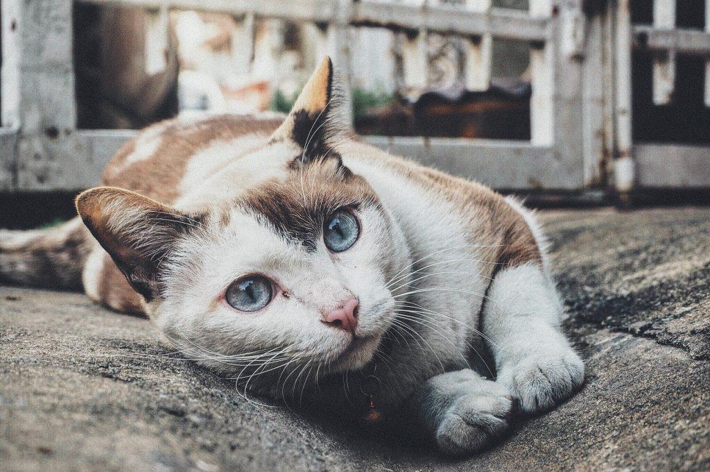 Beste kattenbak met zeef