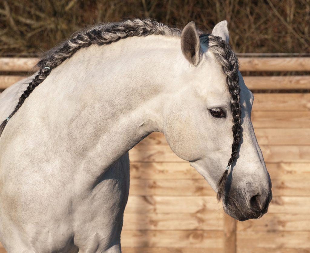 beste paardendekens