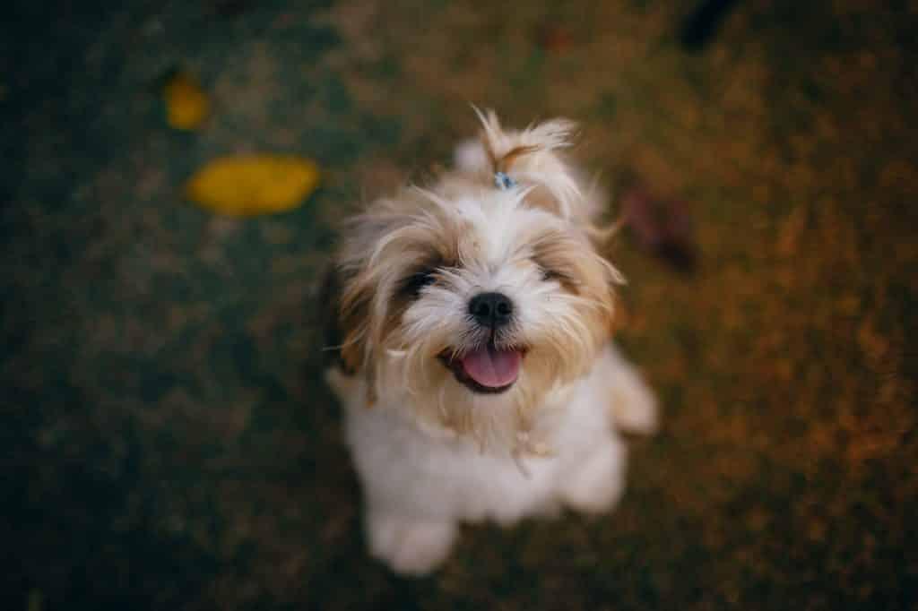 beste hondenfluitje