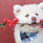 beste hondenbandana