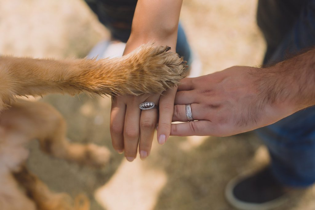 beste nagelvijl hond